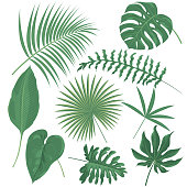 Vector tropical plants
