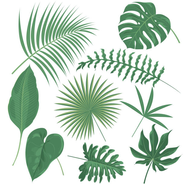 tropical plants - palm leaf stock illustrations, clip art, cartoons, & icons