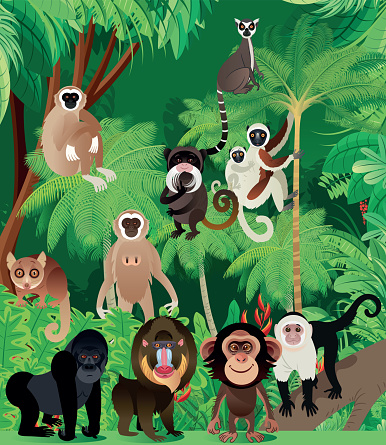 Tropical Rainforest and Primates