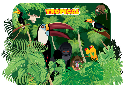 Tropical rainforest and Toucan