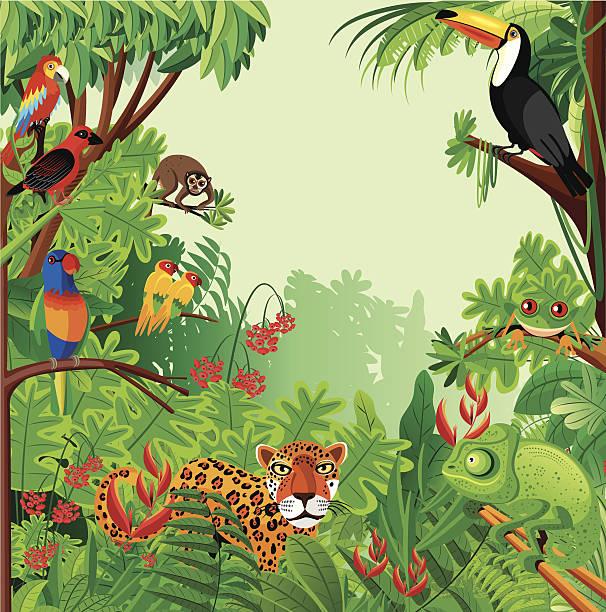 Tropical rainforest Vector Tropical rainforest amazon stock illustrations