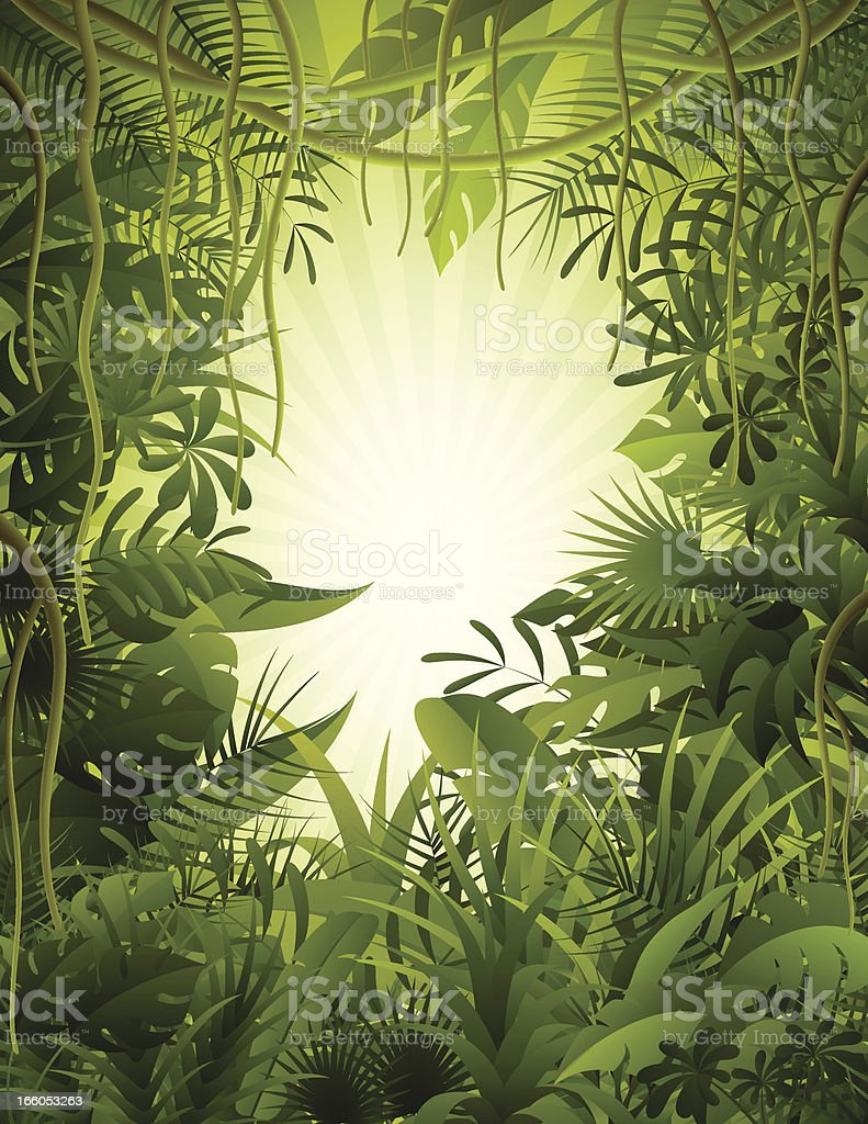 Tropical Rainforest royalty-free tropical rainforest stock vector art & more images of amazon rainforest