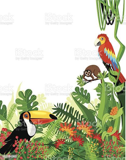 Tropical rainforest vector id455584955?b=1&k=6&m=455584955&s=612x612&h=strx 4yv3vfthwdmpwedxuhv vy3prqkocc3esnuogk=