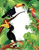 Vector Tropical Rainforest