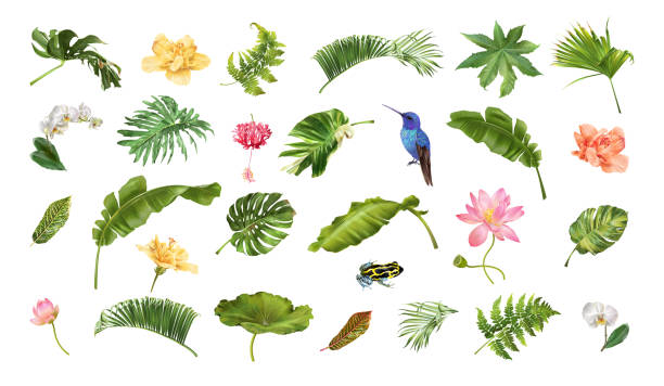 Tropical realistic plants animals and flowers set Vector realistic illustration set of tropical leaves and flowers isolated on white background. Highly detailed colorful plant collection. Botanical elements for cosmetics, spa, beauty care products tropical flower stock illustrations