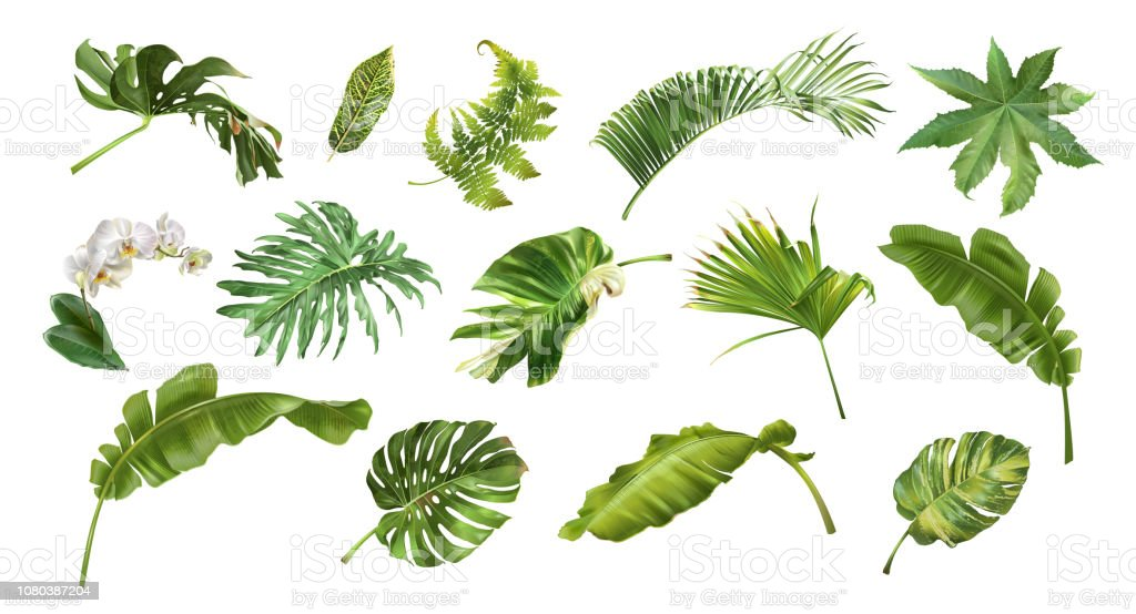 Tropical realistic style plants and flowers set