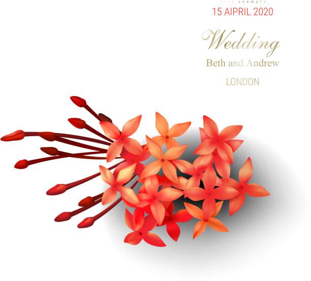stockillustraties, clipart, cartoons en iconen met tropische rode ixora bloemen op witte achtergrond - pauwenkers