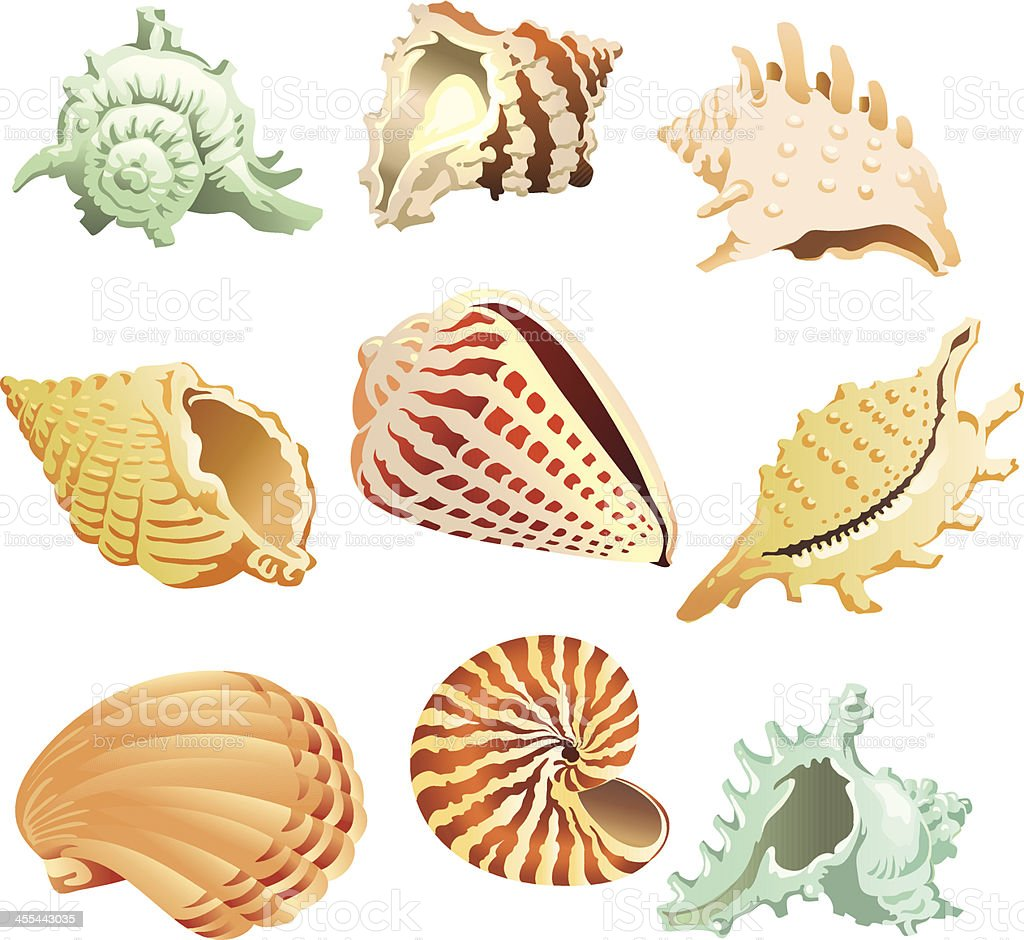 Tropical Sea Shells Stock Vector Art & More Images of ...