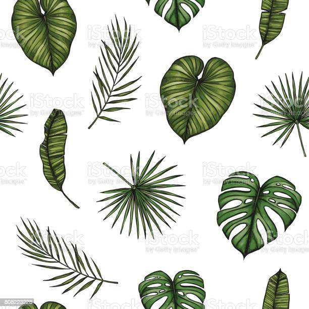 Tropical seamless pattern background with palm leaves hand drawn vector id808223228?b=1&k=6&m=808223228&s=612x612&h=x4ghqedmga8x3xgyn1nzwq0vc2oo klkwktexlps7fg=