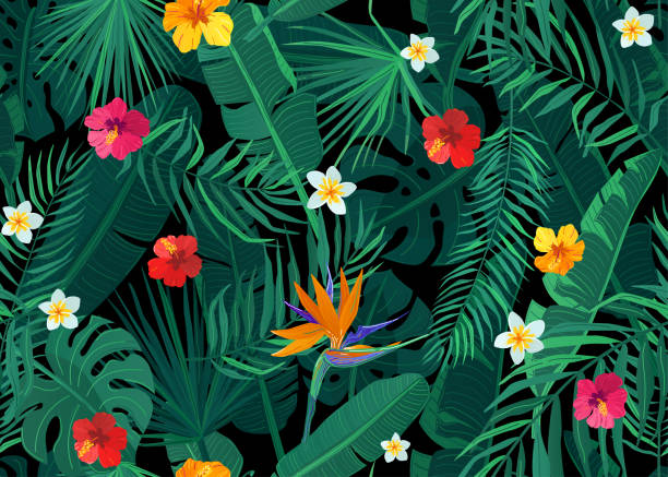 Tropical seamless pattern vector background with exotic palm, banana, monstera leaves and hibiscus, strelitzia, frangipani flowers on dark black backdrop Tropical seamless pattern vector background with exotic palm, banana, monstera leaves and hibiscus, strelitzia, frangipani flowers on dark black backdrop. bird of paradise plant stock illustrations