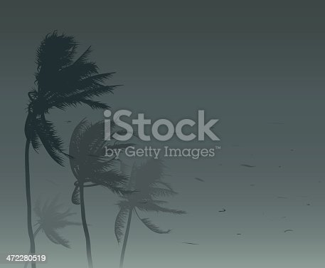 Palm trees in strong wind