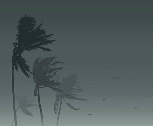 sztorm tropikalny - palm tree stock illustrations