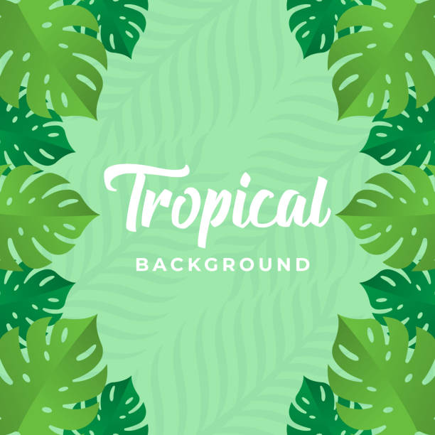 Tropical Vector Background Design Illustration. Tropical leaves Vector flat design illustration. Abstract Tropical Summer background design template for banner, pattern, invitation, poster, brochure. Tropical Vector Background Design Illustration. Tropical leaves Vector flat design illustration. Abstract Tropical Summer background design template for banner, pattern, invitation, poster, brochure. holiday and seasonal icons stock illustrations