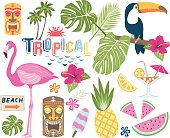 A vector illustration of Tropical vector collection set. Perfect for Tropicana theme, summer holiday, card and many more.