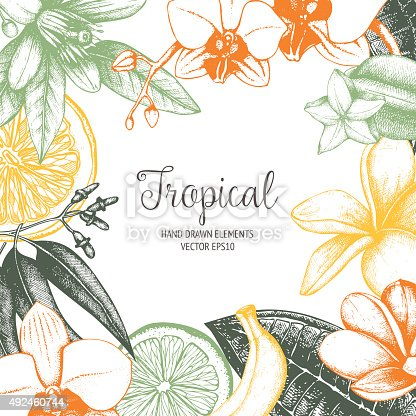 Vector design with ink hand drawn tropical fruit, flowers and leaves sketch. Vintage exotic plants background