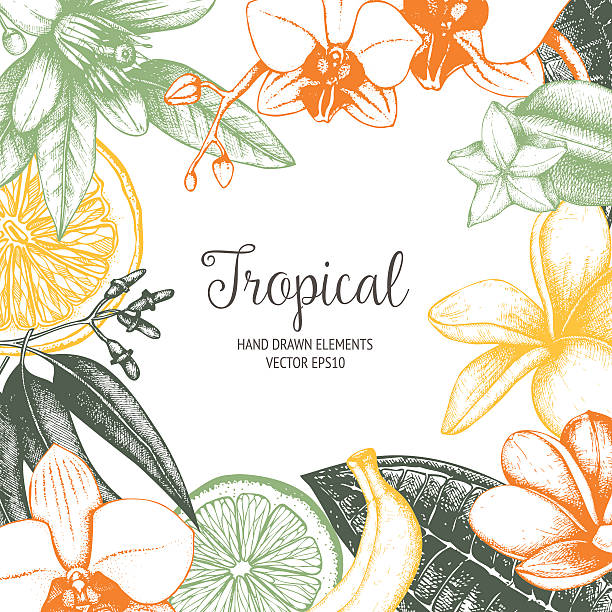 Tropical vector design Vector design with ink hand drawn tropical fruit, flowers and leaves sketch. Vintage exotic plants background banana borders stock illustrations