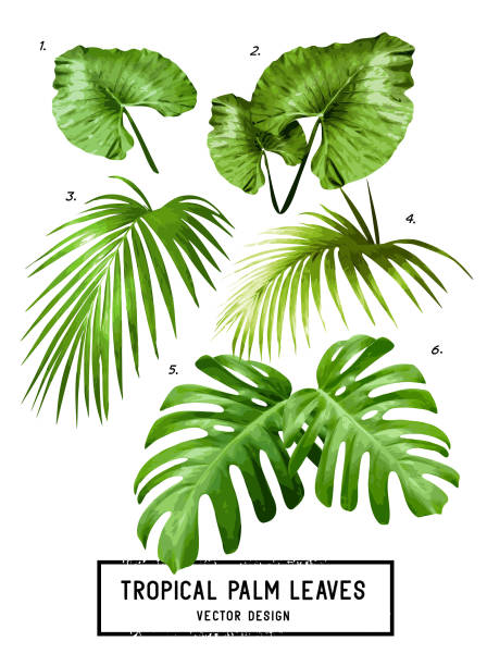 tropical vector palm leaves - palm leaf stock illustrations, clip art, cartoons, & icons