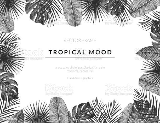 Tropical vector template background with vintage exotic plants hand vector id984338638?b=1&k=6&m=984338638&s=612x612&h=yjz7dzbu4fsovxb4k0b4lba1egbsvthwyp9odcdamss=