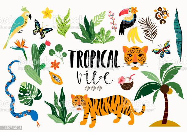 Tropical wild collection vector id1150710723?b=1&k=6&m=1150710723&s=612x612&h=ywl8clg4iztr3pzbdiwe5un zz9hp7zxz0dllazp7g4=