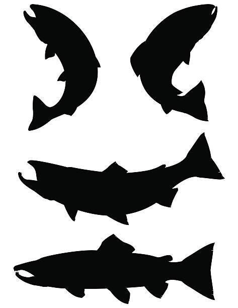 illustrazioni stock, clip art, cartoni animati e icone di tendenza di silhouette salmone, la trota e - trout