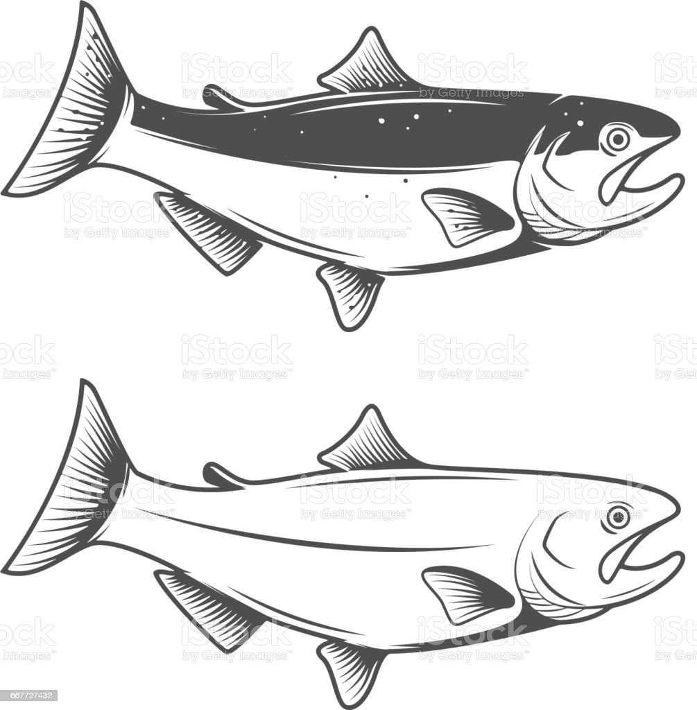 Trout fish icons isolated on white background. Design element for logo, label, emblem, sign, brand mark. vector art illustration
