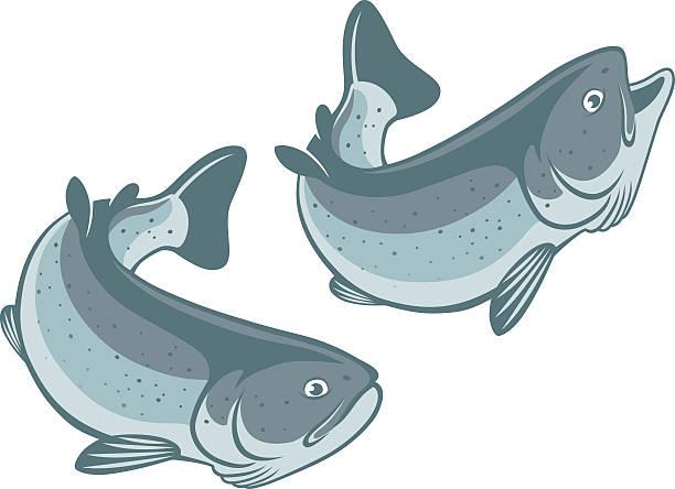 trout fish - redfish stock illustrations, clip art, cartoons, & icons