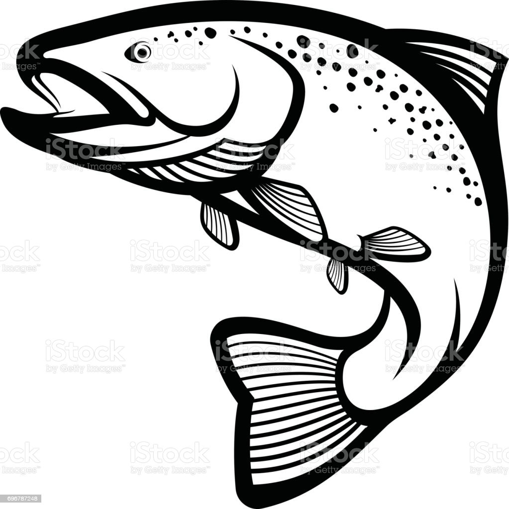 royalty free brown trout clip art vector images illustrations rh istockphoto com rainbow trout clip art trout clipart black and white