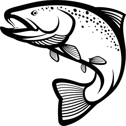 Trout Fish Stock Illustration - Download Image Now - iStock