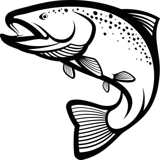 illustrazioni stock, clip art, cartoni animati e icone di tendenza di trout fish - trout