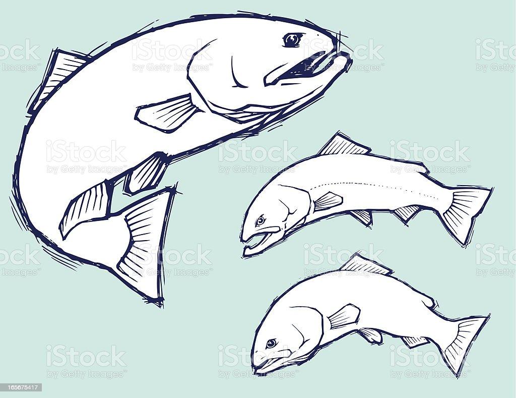 Trout Pencil Sketches vector art illustration