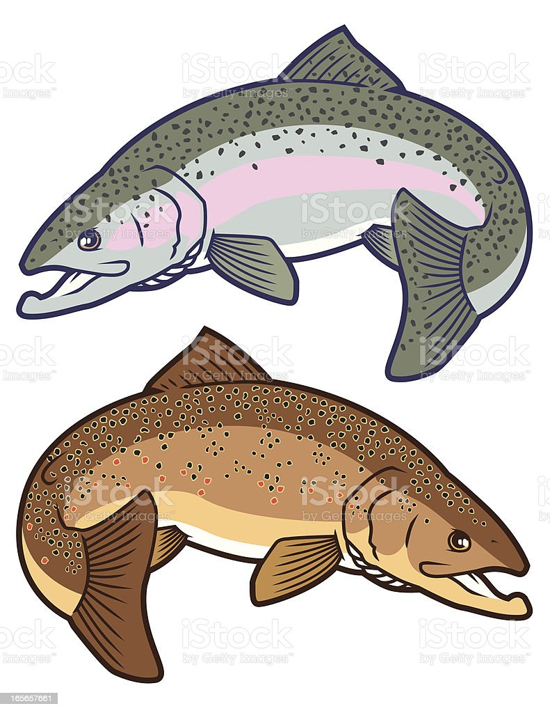 Trout: Rainbow and Brown royalty-free trout rainbow and brown stock vector art & more images of animal