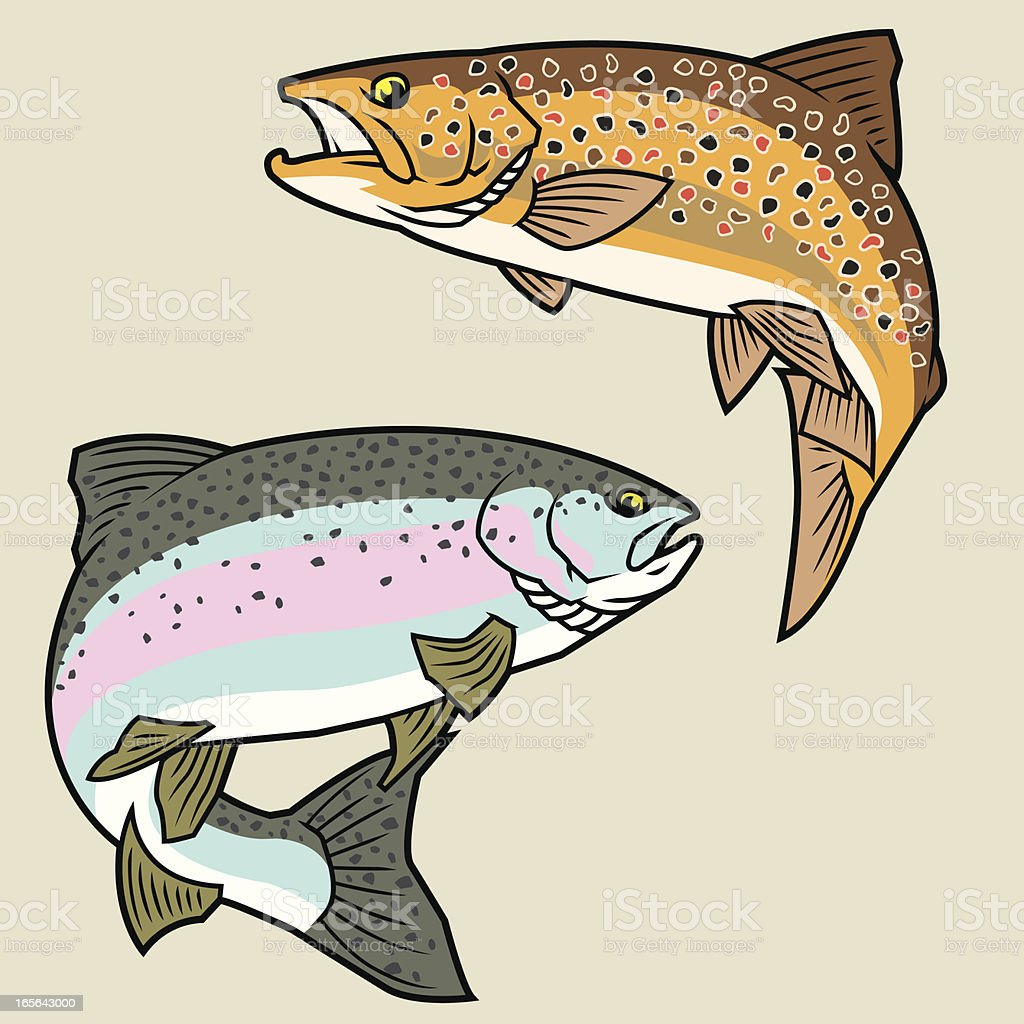 Trout: Rainbow & Brown vector art illustration