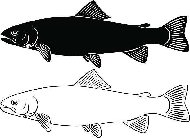 trout - redfish stock illustrations, clip art, cartoons, & icons
