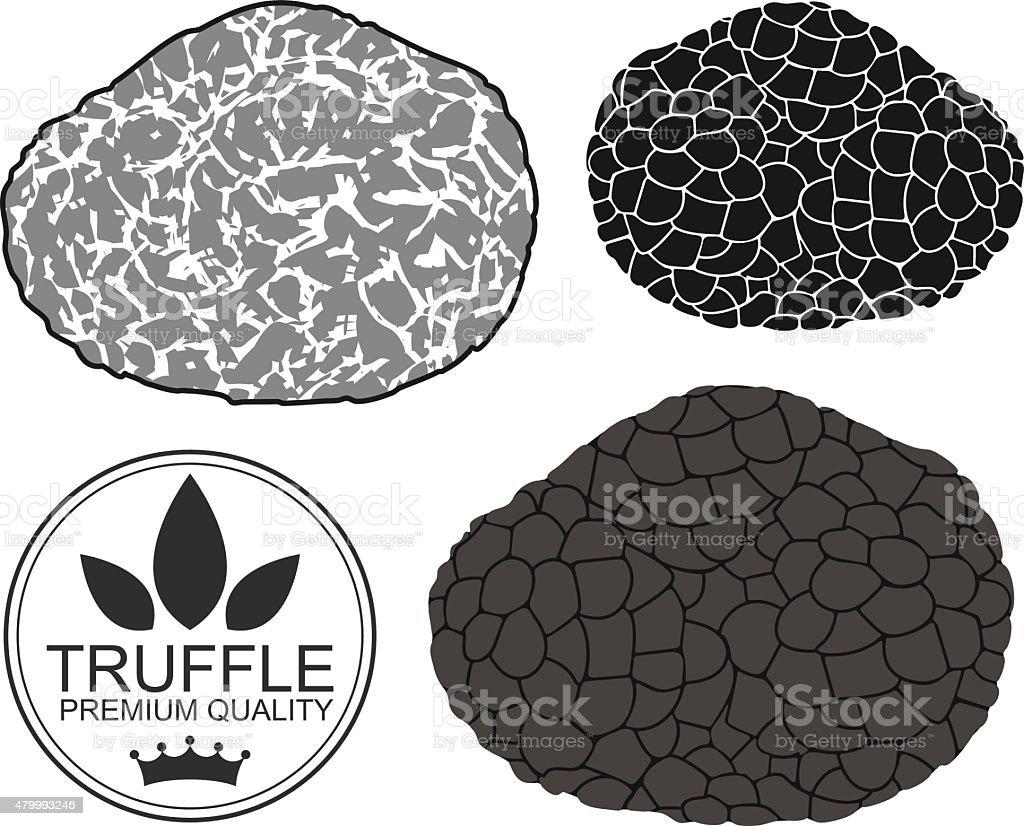 Truffle vector art illustration
