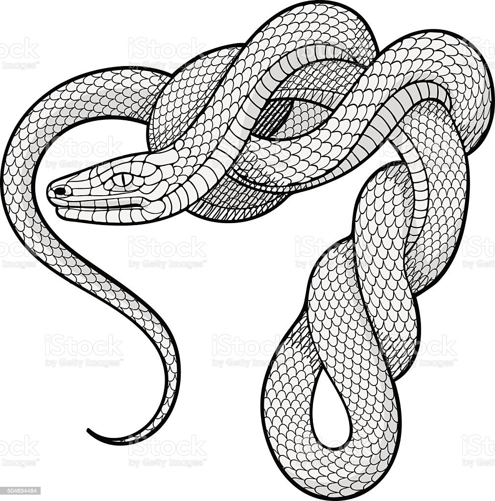 Ttwisted snake. Decorative element vector art illustration