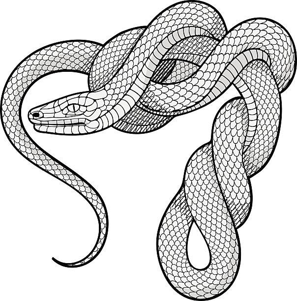 Ttwisted serpent. Élément décoratif - Illustration vectorielle