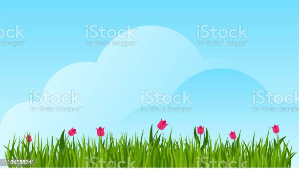Tulip and a green grass border on blue sky background vector id1134255241?b=1&k=6&m=1134255241&s=612x612&h=dg fzhk5il35gvnykw7oajmrsvwft k60uotrqomg4s=