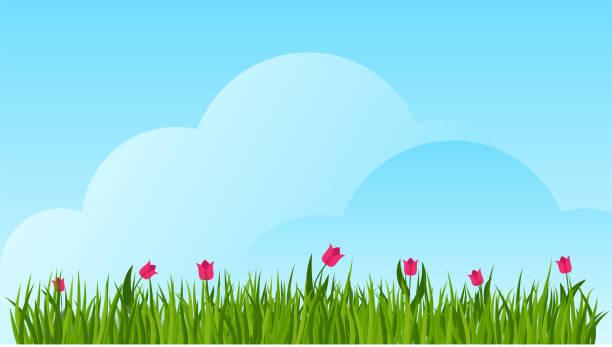 tulpe und eine grüne grasgrenze auf blauem himmel. - blütenstand stock-grafiken, -clipart, -cartoons und -symbole