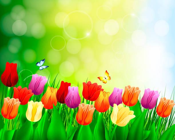 Tulpenrückseite – Vektorgrafik