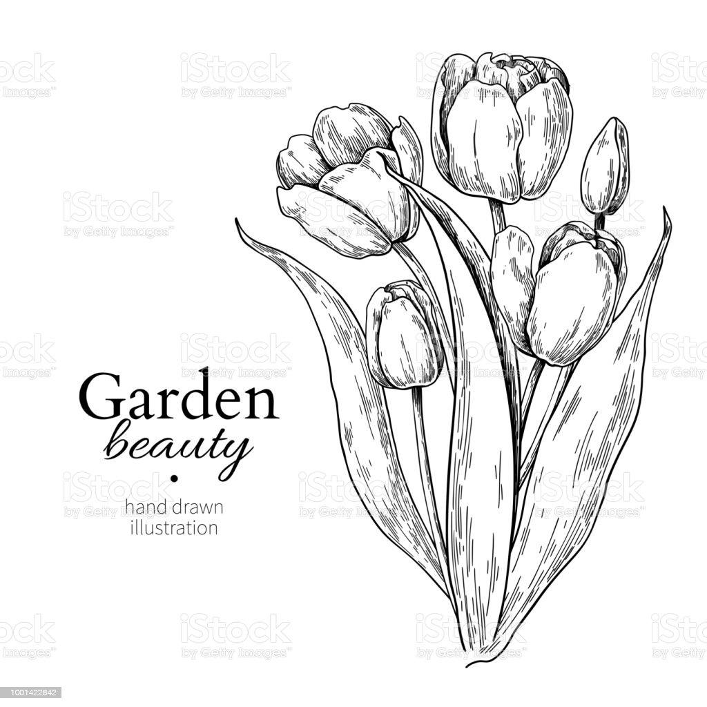 Fleur De Tulipe Et Bouquet De Feuilles De Dessin Vectoriel Main