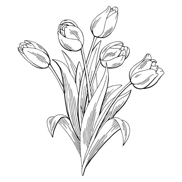 bildbanksillustrationer, clip art samt tecknat material och ikoner med tulip grafisk svart vita isolerade blombukett skiss illustration vektor - tulpaner