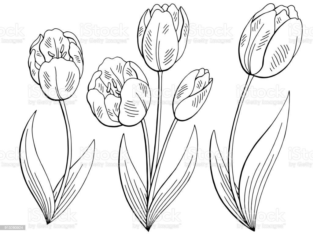 Lale çiçek Grafik Siyah Beyaz Izole Eskiz Illüstrasyon Vektör Ayarla