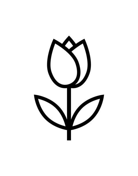 bildbanksillustrationer, clip art samt tecknat material och ikoner med tulip blomma ikon - tulpaner