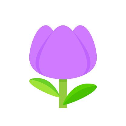 tulip flower purple simple isolated on white background, tulips purple cartoon for clip art, illustration tulip flower