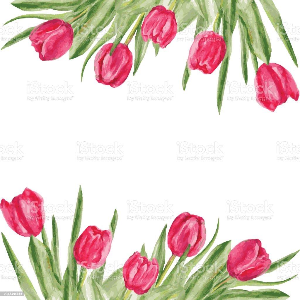 Lale çiçek Suluboya Boya Illüstrasyon Izole Beyaz Arka Plan üzerinde