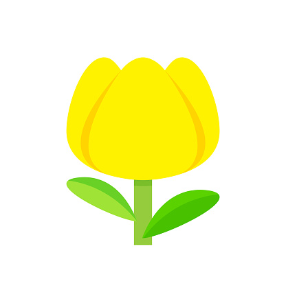 tulip flower yellow simple isolated on white background, tulips yellow cartoon for clip art, illustration tulip flower