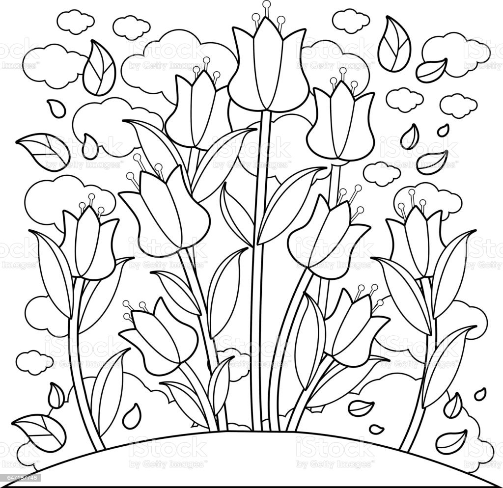 Tulip flowers. Coloring book page vector art illustration