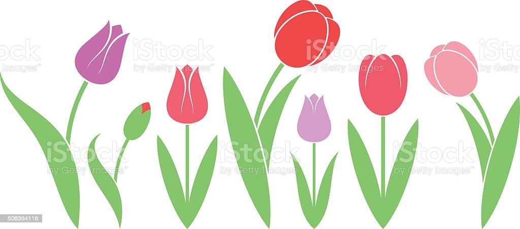 Tulip. Isolated flowers on white background vector art illustration
