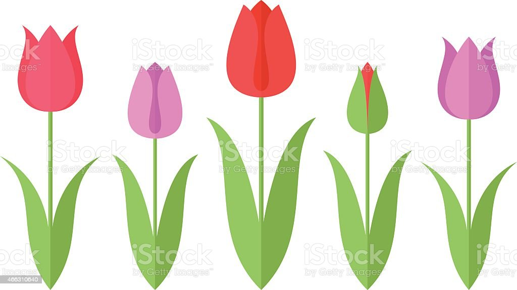 Tulip. Set vector art illustration