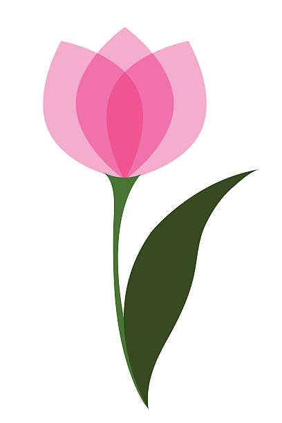 bildbanksillustrationer, clip art samt tecknat material och ikoner med tulip single flower vector - tulpaner